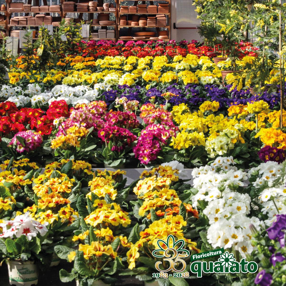 Floricoltura Quaiato – Garden Verona