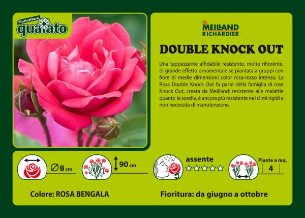Rosa Double Knock Out - Meilland