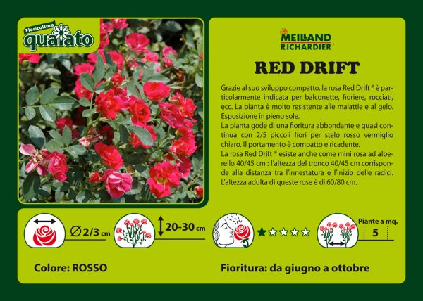 Rosa Red Drift - Meilland