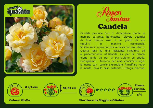 Rosa Candela Rosen Rantau