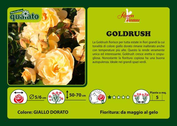 Rosa Goldrush - Rosen Tantau