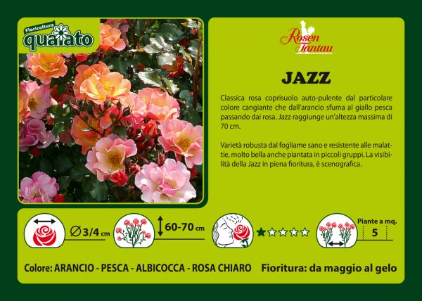 Rosa Jazz - Rosen Tantau