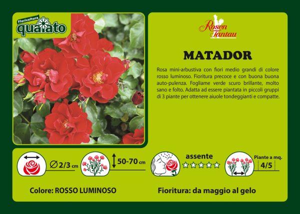 Rosa Matador - Rosen Tantau