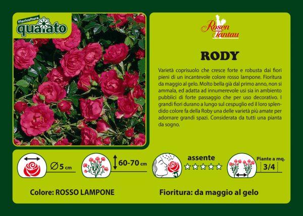 Rosa Rody - Rosen Tantau