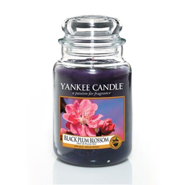 black plum blossom giara grande