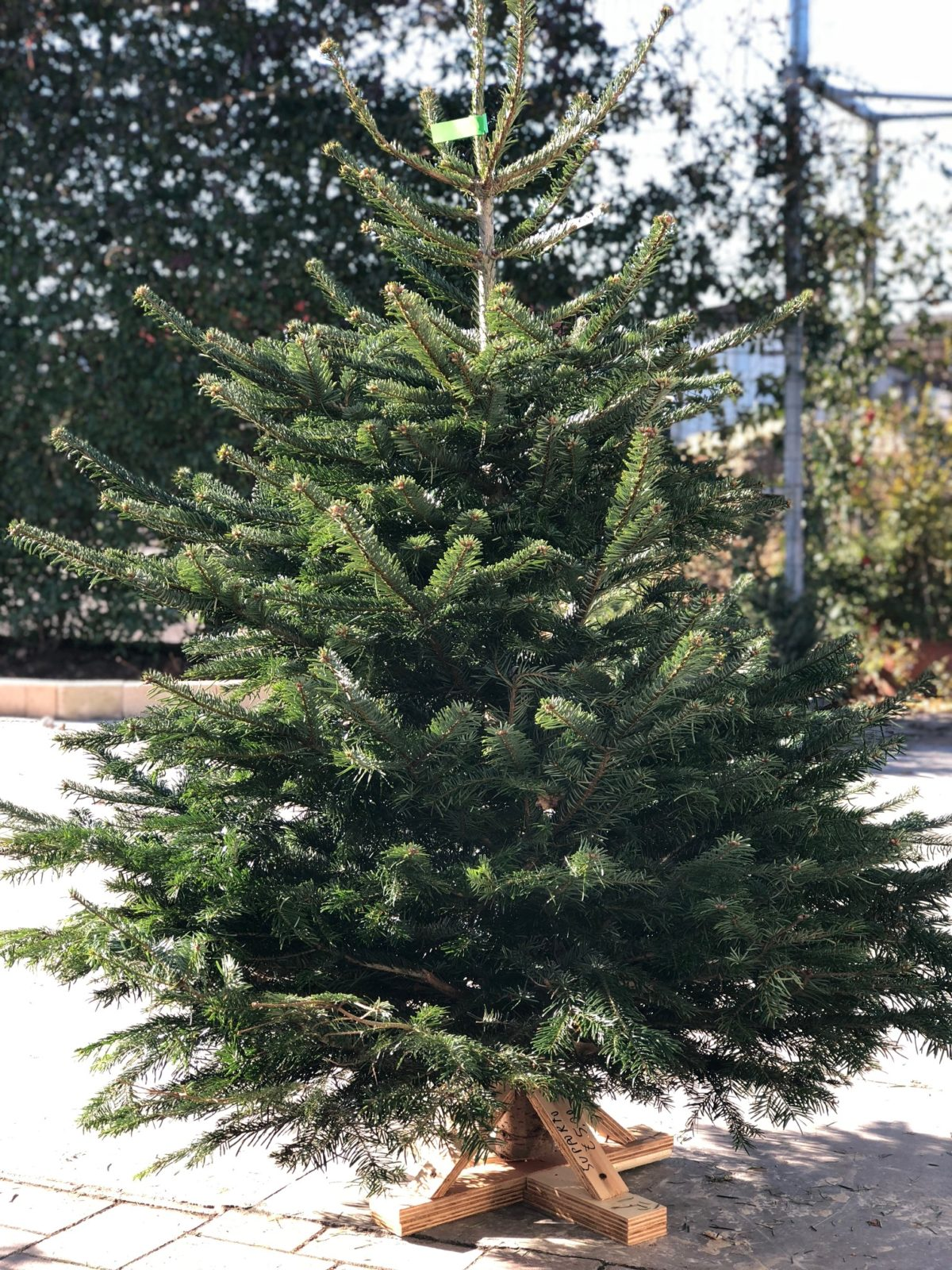 Albero Di Natale Vero.L Albero Di Natale Quello Vero Floricoltura Quaiato