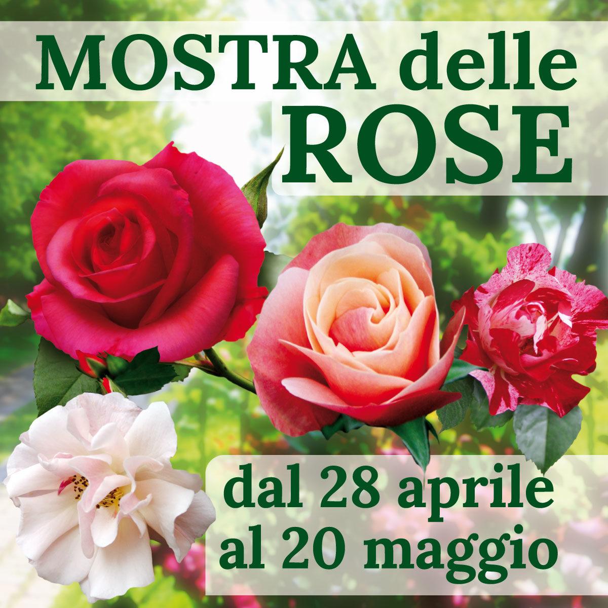 Piante Di Rose Rampicanti mostra delle rose 2018 dal 28 aprile al 20 maggio