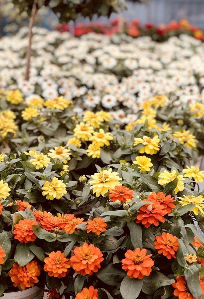 8 Fiori Resistenti Al Sole Da Piantare In Estate Floricoltura Quaiato