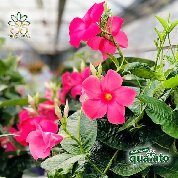 Fiori Estivi.15 Meravigliose Piante Estive Resistenti Al Sole Floricoltura