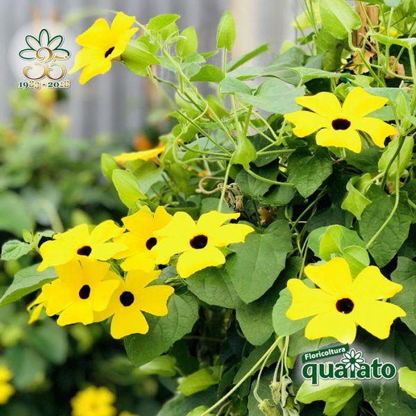 15 meravigliose piante estive resistenti al sole for Fiori da esterno