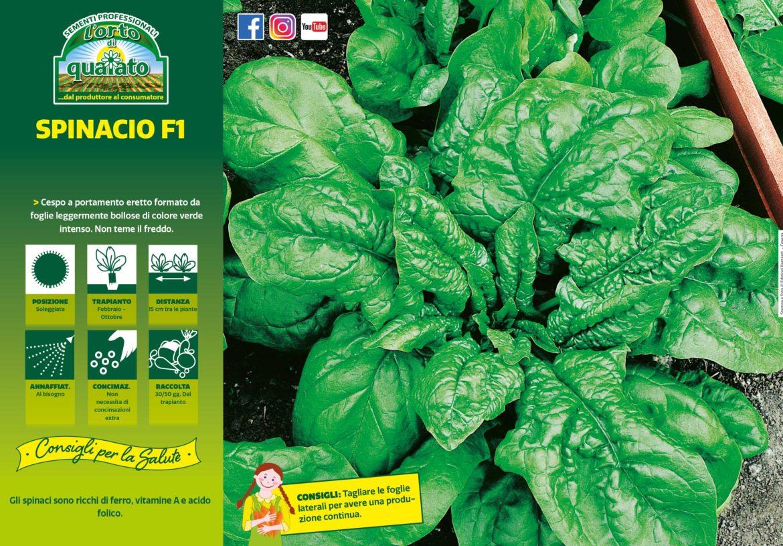 coltivazione spinacio