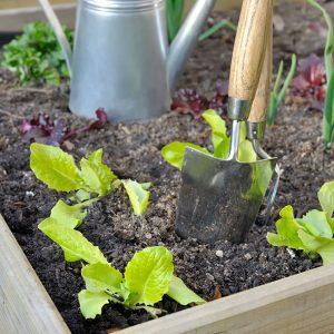 cosa-piantare-orto-agosto-settembre