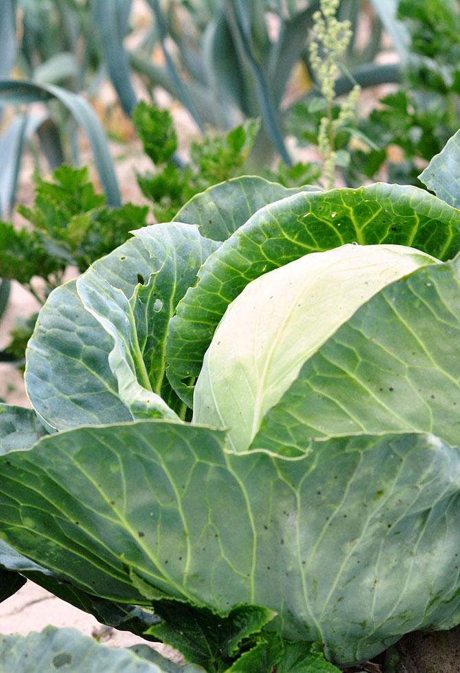 ortaggi-da-piantare-a-settembre