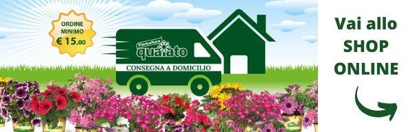 consegna a domicilio piante e fiori