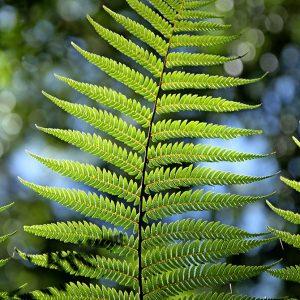 piante perenni da ombra