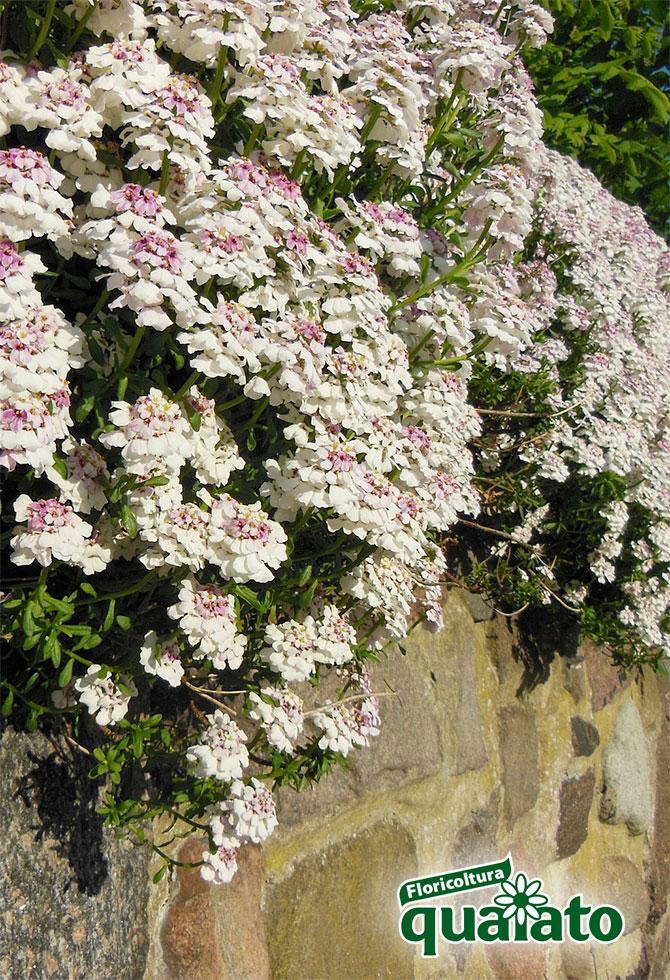 Vasi Bianchi Per Fiori Da Esterno.Piante Perenni Da Vaso Per Il Giardino E Il Balcone