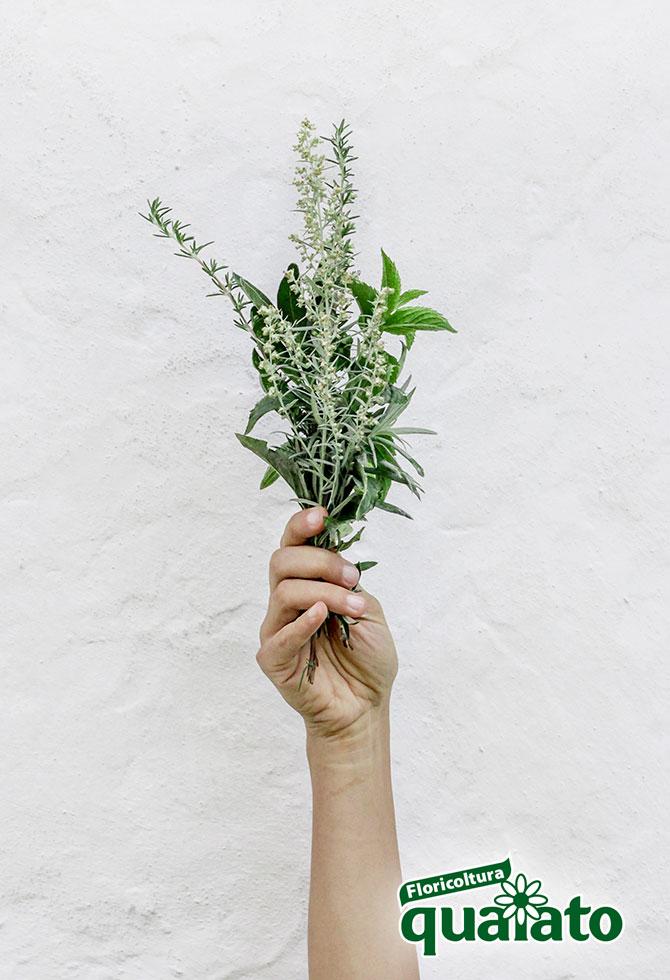 piante aromatiche da usare in cucina