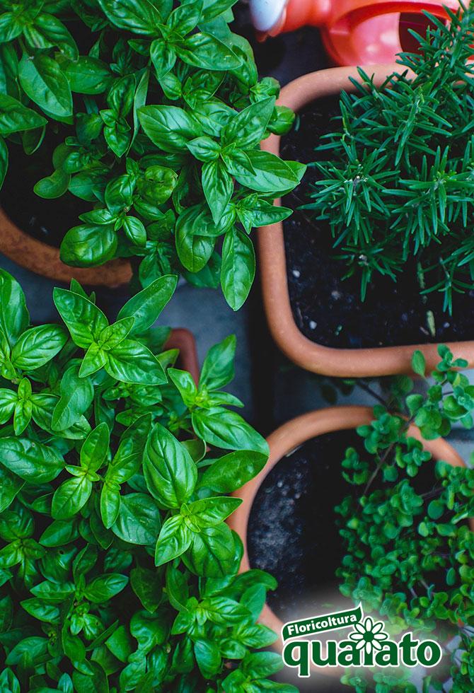 piante antizanzare aromatiche