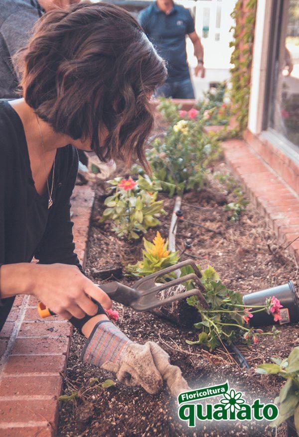 fiori e ortaggi da piantare ad agosto e settembre