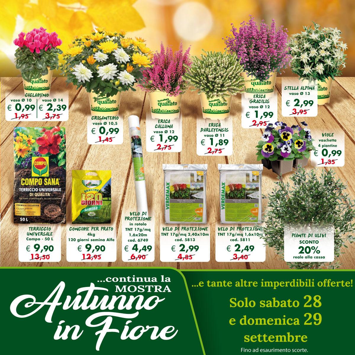Concime Per Prato Autunnale la mostra autunno in fiore continua! - floricoltura quaiato