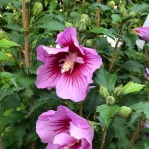 piante perenni con fiori