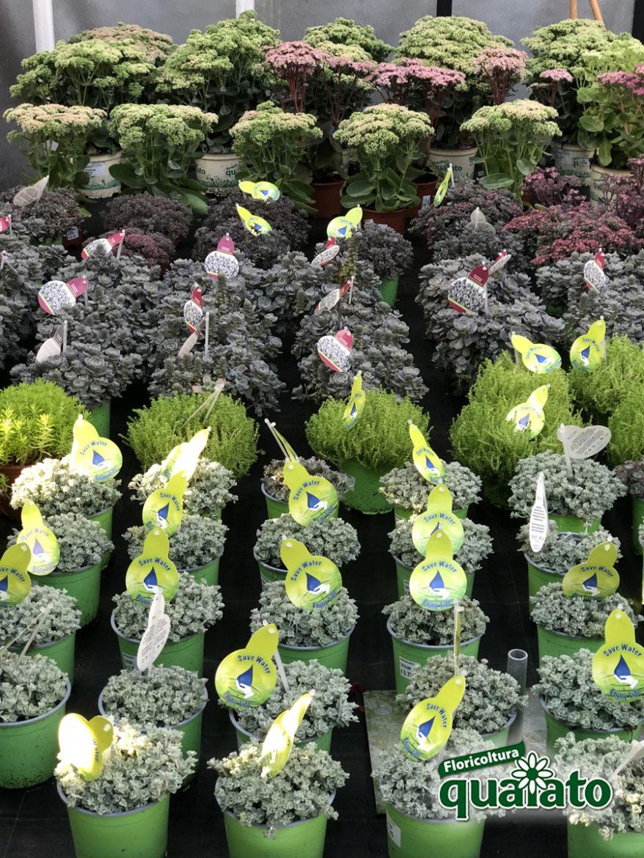 Fiori Perenni Da Balcone piante grasse perenni da esterno facilissime da coltivare