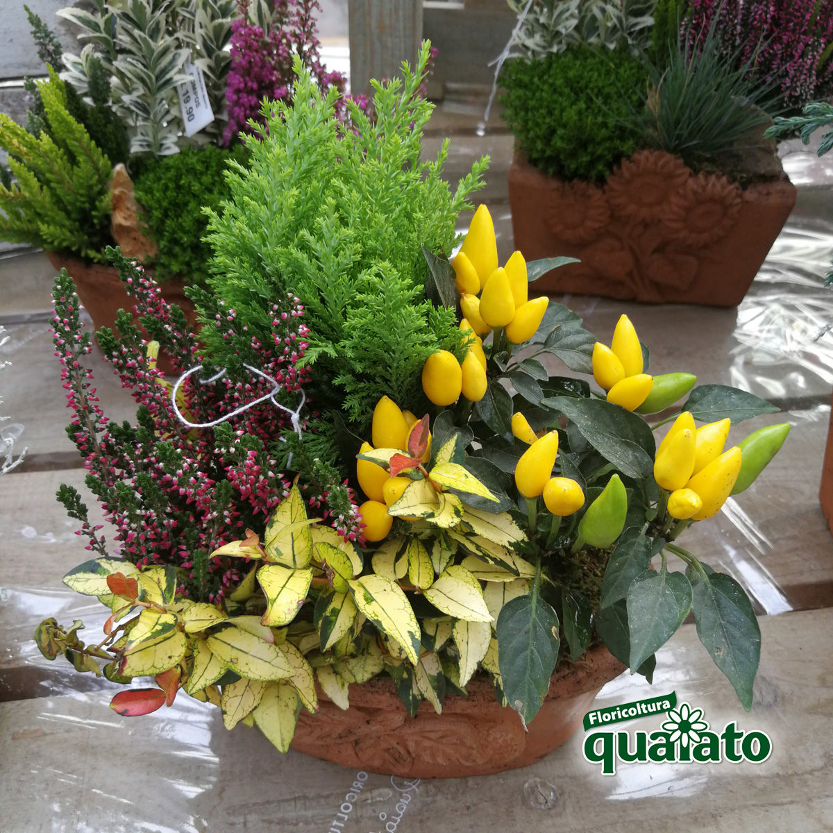 Pianta Foglie Rosse E Verdi idee per composizioni floreali autunnali davvero uniche