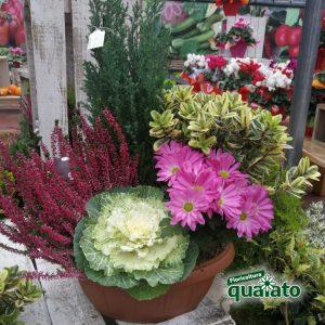 Fiori Quaiato.Composizioni Floreali Floricoltura Quaiato