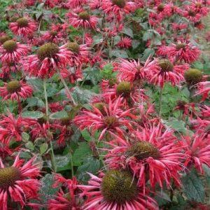 piante aromatiche ornamentali decorative