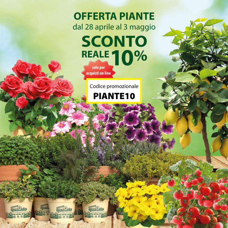 Immagini Piante E Fiori sconto 10% su piante e fiori - floricoltura quaiato